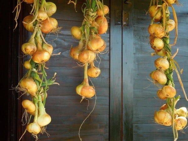 storage-onions
